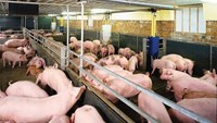 Government on track to divest from livestock company