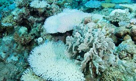 Vietnam at risk of massive coral die-off due to El Nino: report