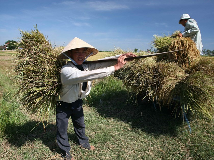 A file photo of farmers harvesting rice in southern Vietnam. Photo: Diep Duc Minh/Thanh Nien