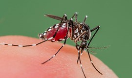 Vietnam reports 260 percent rise in dengue infections