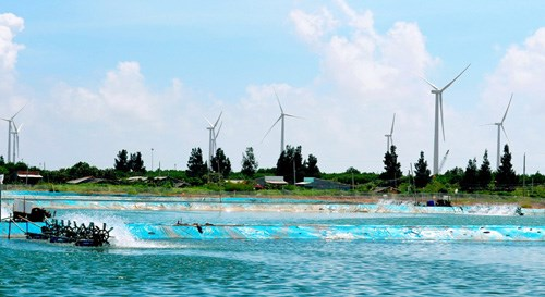 The Bac Lieu wind power plant has been connected to the national power grid. Wind power price in Vietnam now is the lowest in the world. (Photo: Tran Thanh Phong)