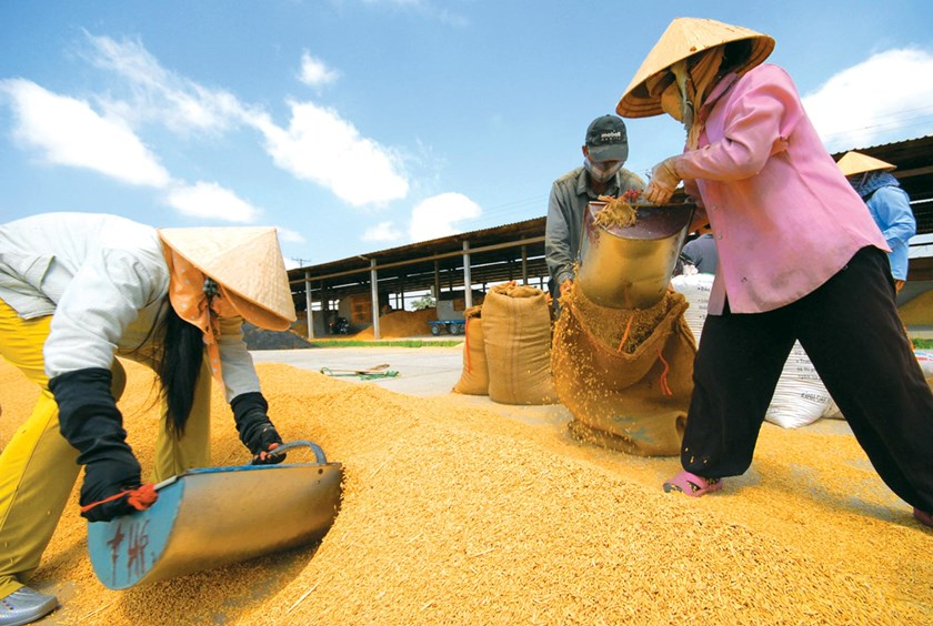 Together with sugar cane, motorbikes and plastic products, rice is the commodity with low export potential. Photo credit: Le Hoang Vu