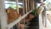 TPP to deal big blow to Vietnam livestock industry