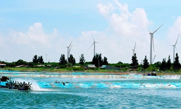 A wind power plant in the southern province of Bac Lieu that has been connected to the national power grid. Photo: Tran Thanh Phong