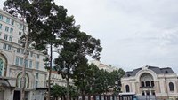 'Saigon needs plan to preserve aging street trees': expert
