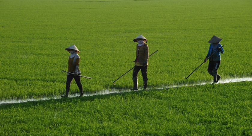 Farmers walk on a rice field in southern Vietnam on December 10, 2014. Photo credit: AFP