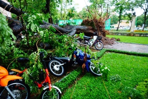 The winds, coupled with rain and lighting, uprooted a series of trees in Hanoi on Saturday. Photo: Ngoc Thang