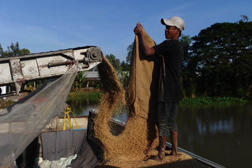 A worker loads paddy onto a boat for a customer at Co Do Agriculture Company in the Mekong Delta city of Can Tho on December 10, 2014. Photo: AFP