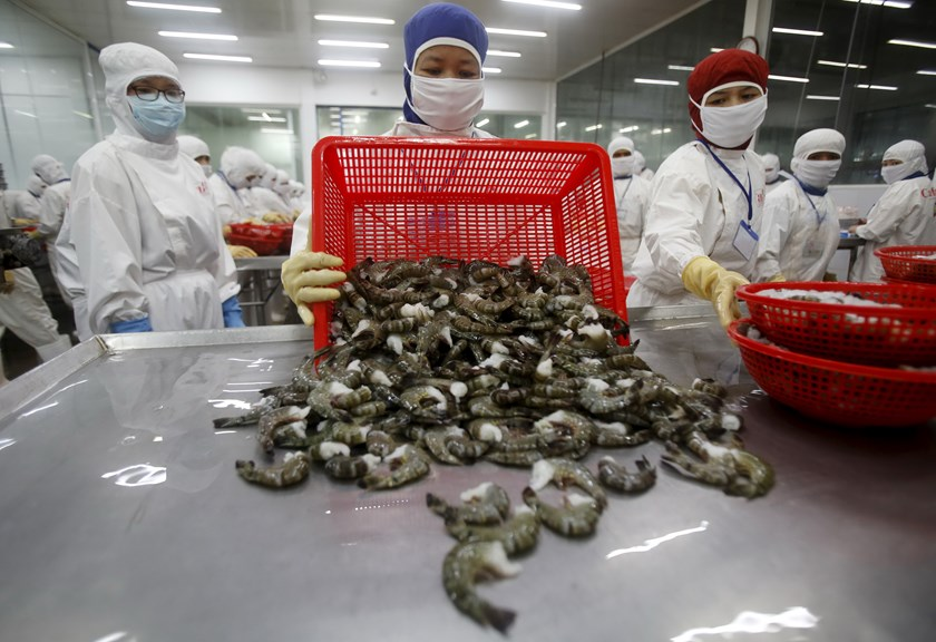 A woman pours black tiger shrimps on the processing table at a factory in southern Vietnam. The country's seafood industry is expected to benefit from a new Pacific Rim trade pact. Photo: Reuters