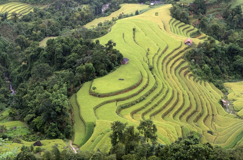 Terraced rice paddy fields are seen during the harvest season in Hoang Su Phi, north of Hanoi, September 17, 2015. Photo: Reuters/Kham