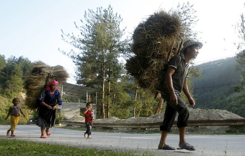 A couple of Hmong ethnic tribe carry rice on their backs while they return home with their children during the harvest season in Mu Cang Chai, northwest of Hanoi October 3, 2015.  Photo: Kham/Reuters