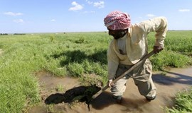 From crisis to development: boosting agriculture's role
