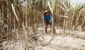 World Bank to loan Vietnam $310 mln for climate resilience