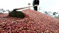 Coffee belt in Vietnam set for rain easing threat of drought