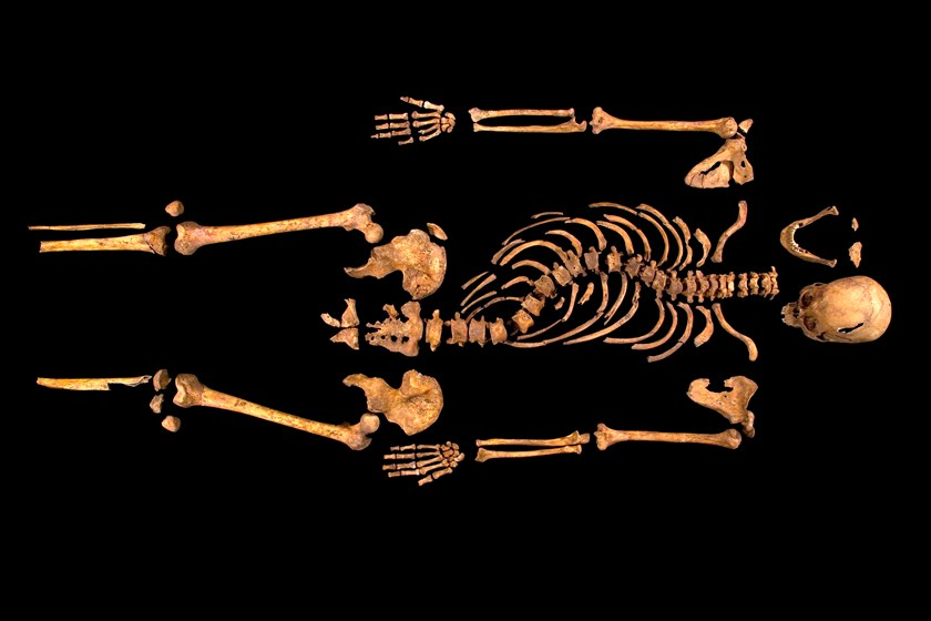 The complete skeleton showing the curve of King Richard III's spine. Courtesy University of Leicester