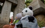 Japanese travel agency takes stuffed toys on tours