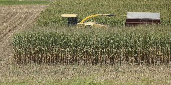 Tall feed corn is harvested on a warm summer day in Coatsville, Maryland August 30, 2013.