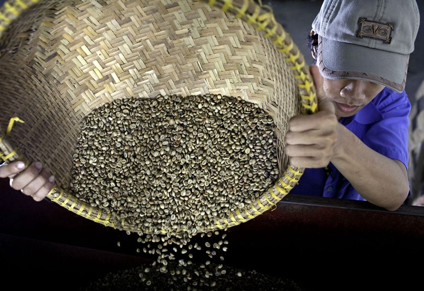 A worker pours green robusta coffee beans into a grader at the Highlands Coffee processing plant in Ho Chi Minh City. Shrinking stockpiles and a smaller crop in Vietnam may bolster futures in London which have climbed 23 percent this year on speculation d