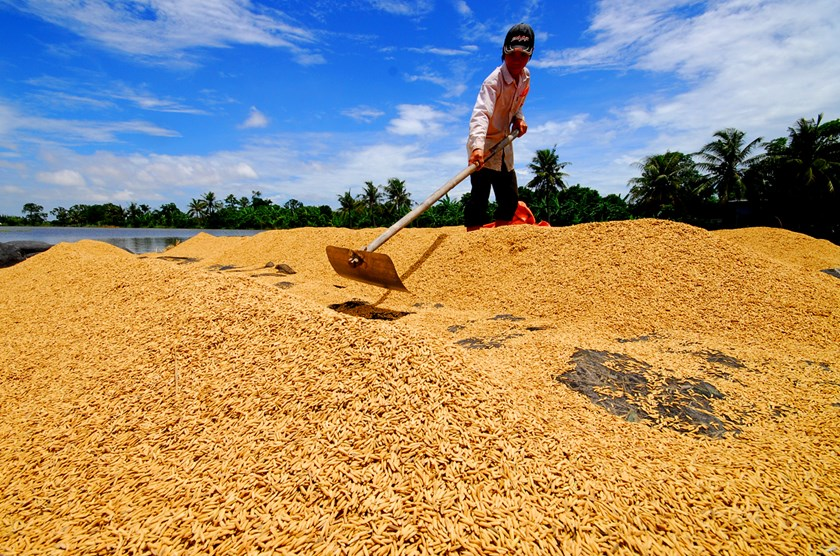 Rice rally seen cooling by Vietnam as Thailand to India sell