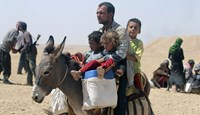 Displaced people from the minority Yazidi sect, fleeing violence from forces loyal to the Islamic State in Sinjar town, ride a donkey as they make their way towards the Syrian border, on the outskirts of Sinjar mountain, near the Syrian border town of Eli