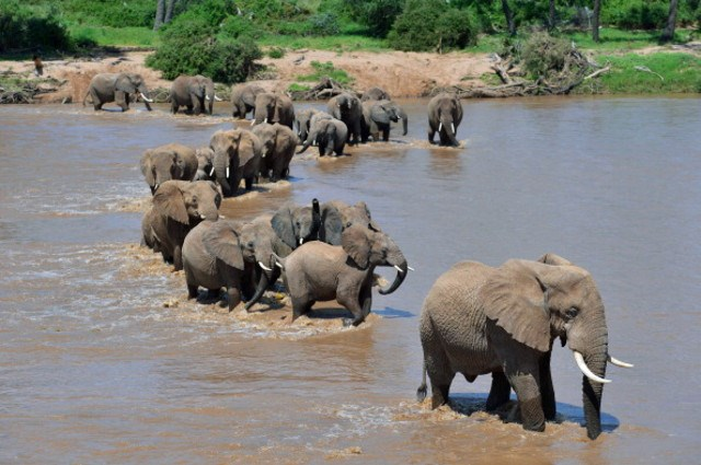 Can China save Africa's elephants?