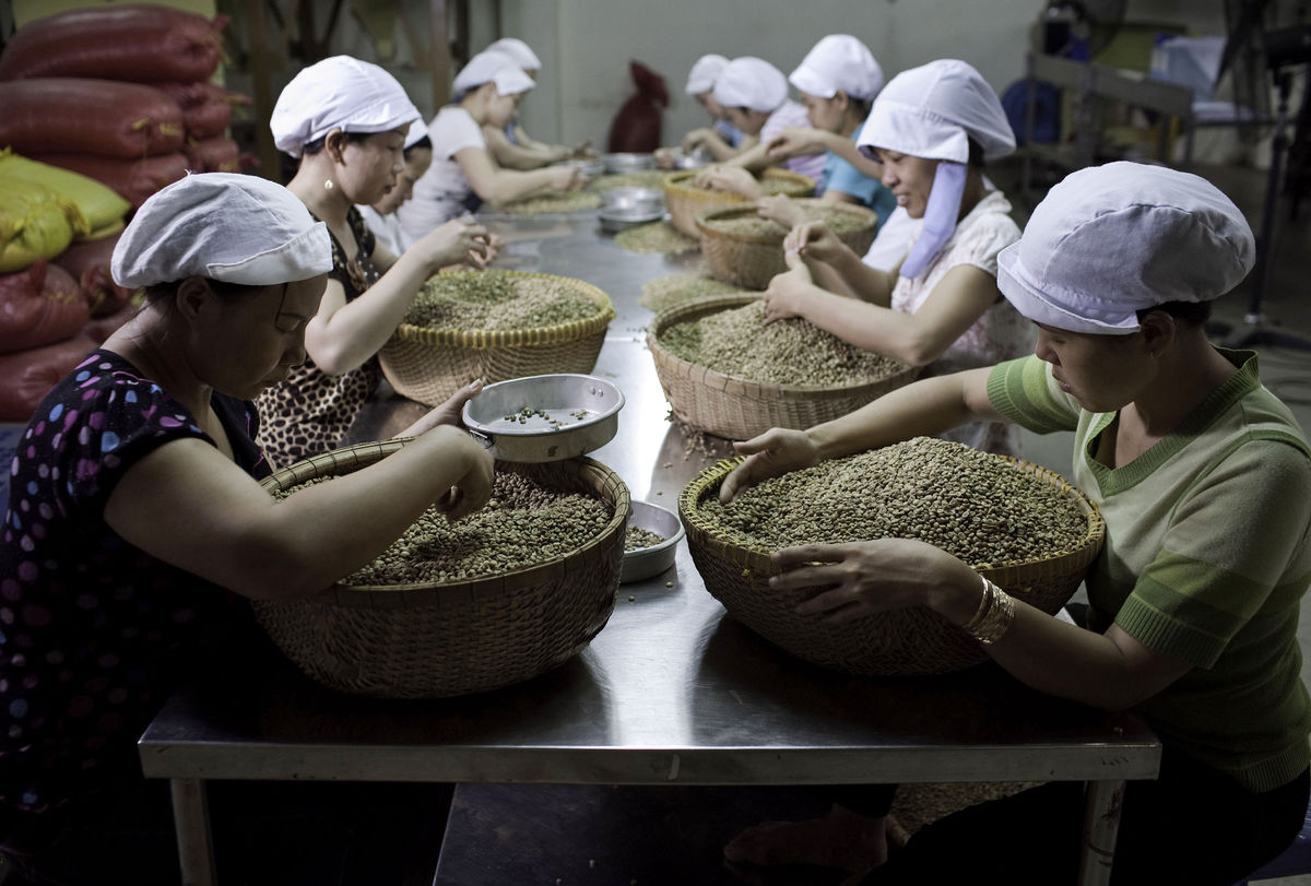 Coffee crop in Vietnam expanding to almost match record