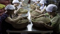 Workers sort through green robusta coffee beans for defects that cannot be removed mechanically in Ho Chi Minh City, Vietnam.
