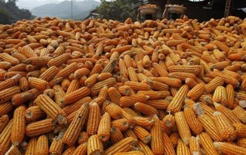 Vietnam buyers renege on corn, soymeal deals as prices sink: traders