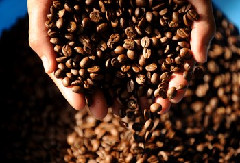 Volcafe raises estimate for global coffee deficit on Vietnam