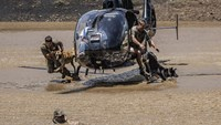 Go, dog, go! South Africa is sick of the rhino poachers