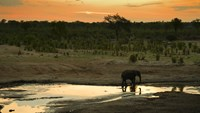 An elephant in Hwange National Park in Zimbabwe.