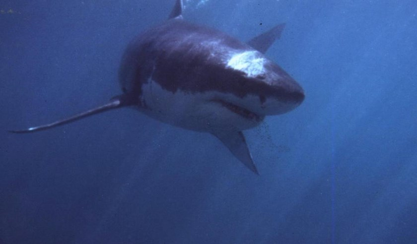 Marine experts say shark attacks are increasing as water sports become more popular