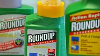 "IARC classified the herbicide glyphosate -- the active ingredient in Roundup -- as ""probably carcinogenic"" on the basis of ""limited evidence"" of cancer among humans.Photo: AFP"