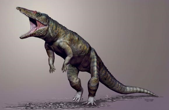 Carnufex carolensis, a newly-discovered crocodilian ancestor that walked on its hind legs, is pictured in this handout life reconstruction obtained by Reuters March 19, 2015.