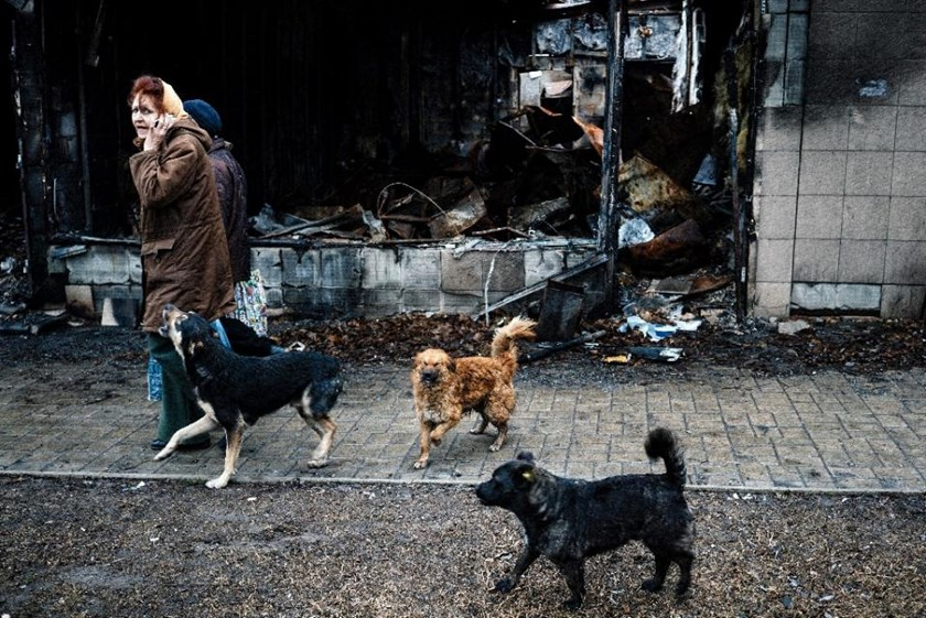 A pack of stray dogs follow women walking past a burnt out shop in the Kievsky district of the eastern Ukrainian city of Donetsk on April 2, 2015