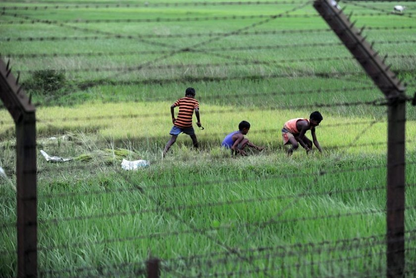 Bangladeshi boys are pictured though barbed wire as they work in a paddy field near the India-Bangladesh border at Fulbari BOP on the outskirts of Siliguri on September 7, 2011