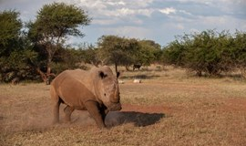 South Africa rhino poaching at new record levels