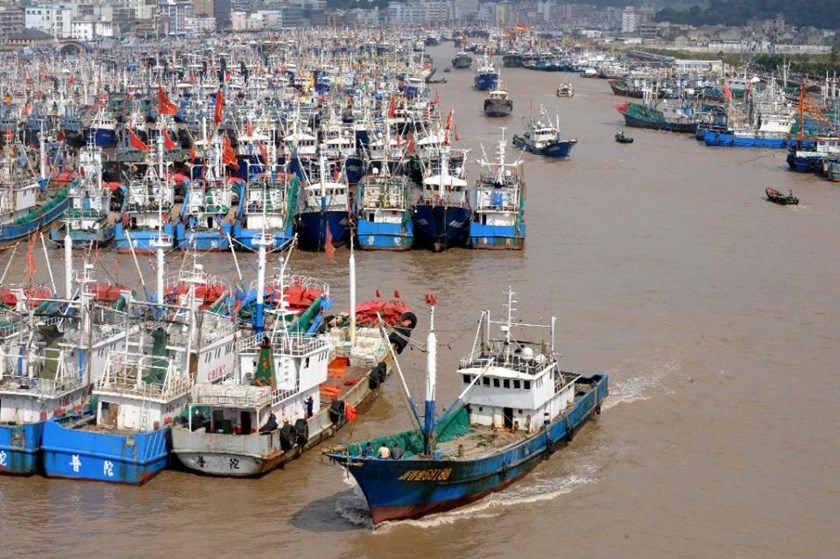 The number of Chinese-flagged or Chinese-owned fishing boats operating in Africa has soared in recent decades, from just 13 in 1985 to 462 in 2013, Greenpeace says