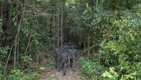 Royal Malaysian Police personnel walk towards the dense jungle area in Wang Kelian that leads to an abandoned migrant camp used by people-smugglers, on May 28, 2015