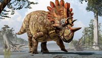 Meet 'Hellboy,' the dinosaur with exotic horns and frill