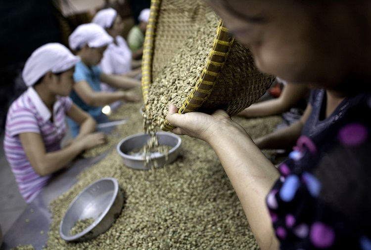 Workers sort through green robusta coffee beans for defects that cannot be removed mechanically, at the Highlands Coffee processing plant in Ho Chi Minh City.