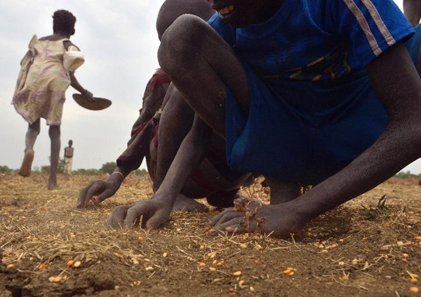 Children gather grain spilled from bags following a food-drop on February 24, 2015 at a village in Nyal in South Sudan's Panyijar county