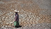 A Thai farmer walks on a dried out field in Bang Pla Ma district, Suphanburi province, a two-hour drive north of Bangkok, July 2, 2015.