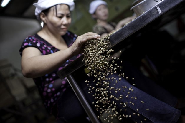 Workers sort through green robusta coffee beans for defects that cannot be removed mechanically, at the Highlands Coffee processing plant in Ho Chi Minh City, Vietnam. Photo: Bloomberg