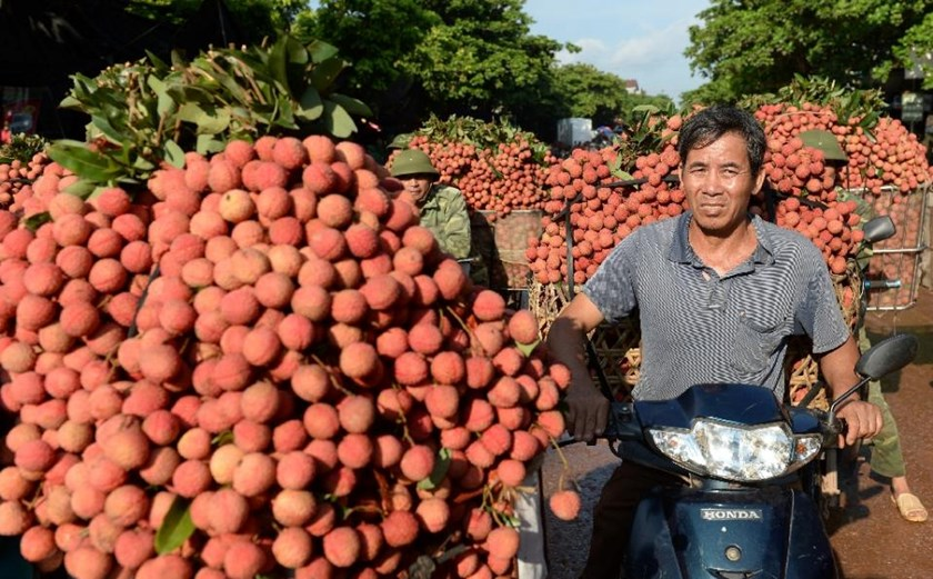 Some 60 percent of Vietnam's lychee crop is exported to China, according to official figures.