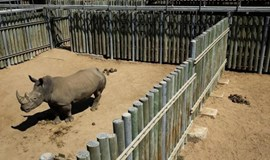 South Africa's Kruger Park still a magnet for rhino poachers