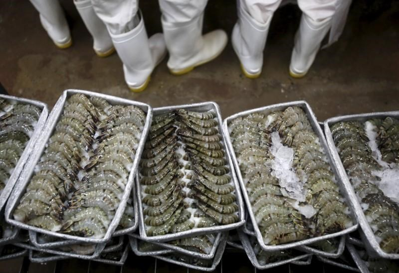 Black tiger shrimps are arranged on ice before being frozen at Cafatex shrimp and Pangasius Catfish factory in Vietnam's southern Mekong delta province of Hau Giang August 28, 2015.