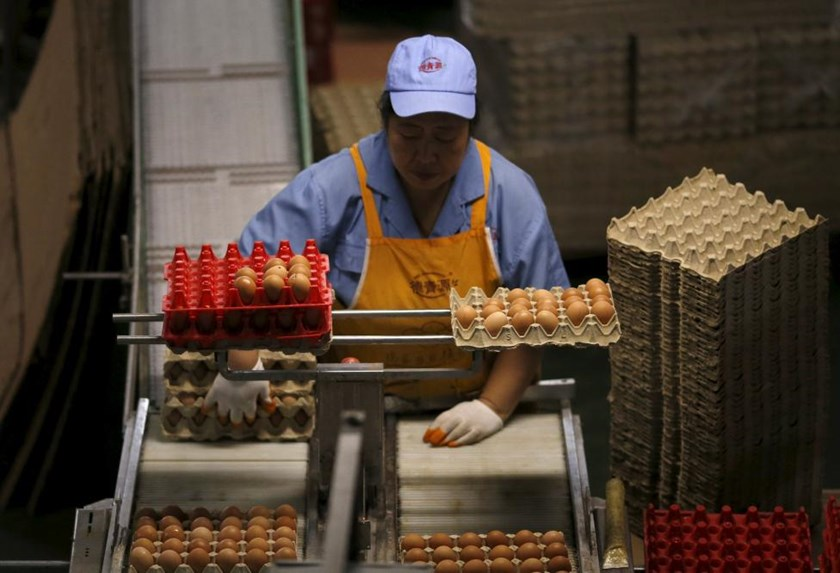 A woman works at a conveyor belt carrying eggs to packaging at Deqingyuan ecological farm on the outskirts of Beijing, China, September 10, 2015.