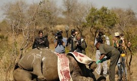 South Africa rhino poaching numbers fall as policing picks up