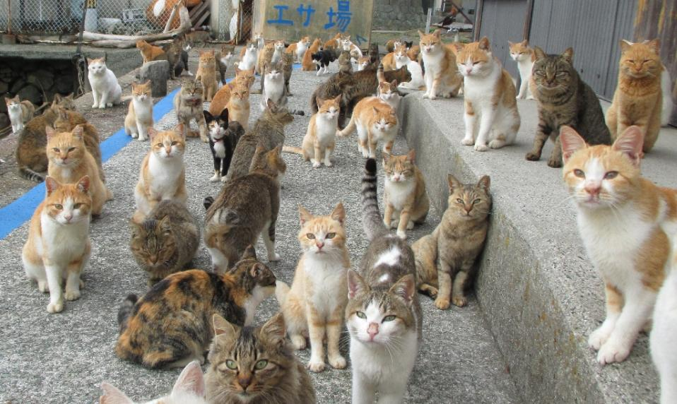 Japan S Cat Island Finds Purr Fect Solution To Food Crisis